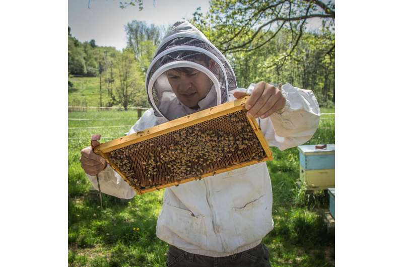 Scientists reveal core genes involved in immunity of honey bees