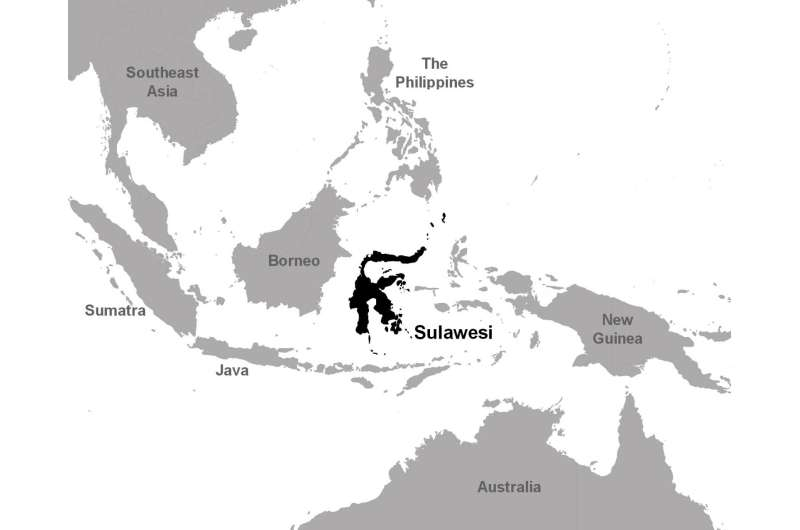 150-year records gap on Sulawesi ends with 5 new species in the world's largest tree genus