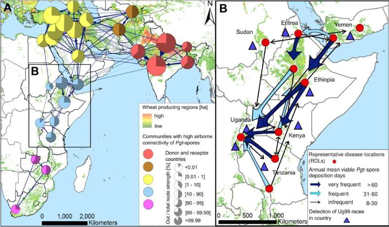 Study identifies likely scenarios for global spread of devastating crop disease