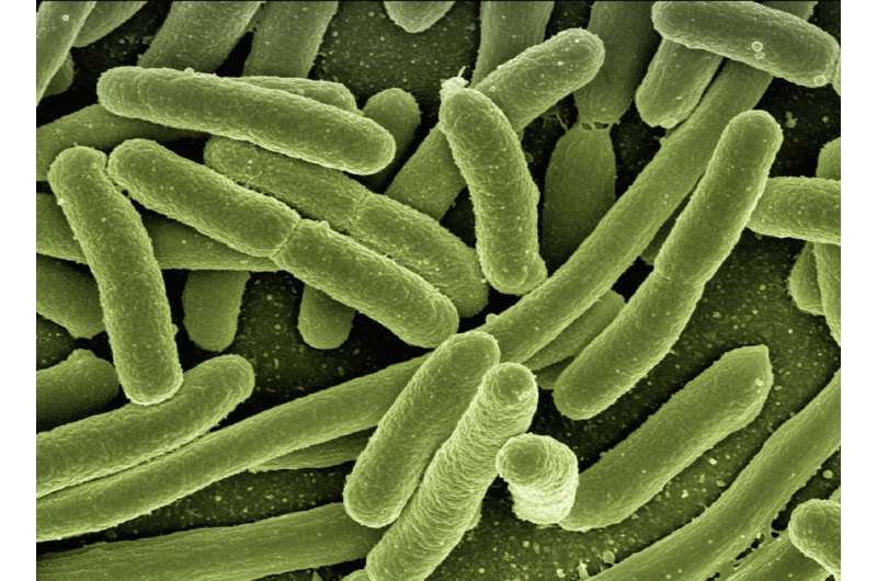 Scientists engineer microbes to form 'memories' of their environment