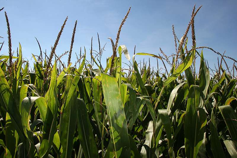 Scientists identify link between plant nitrogen uptake and reduction in greenhouse gas emissions