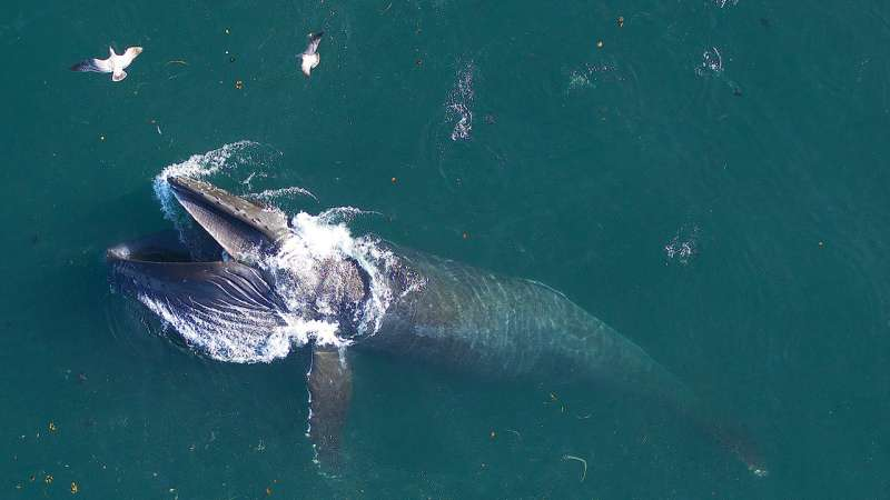 Study identifies whale blow microbiome
