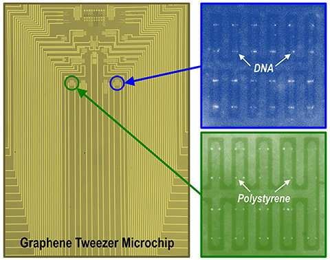 Researchers develop graphene nano 'tweezers' that can grab individual biomolecules