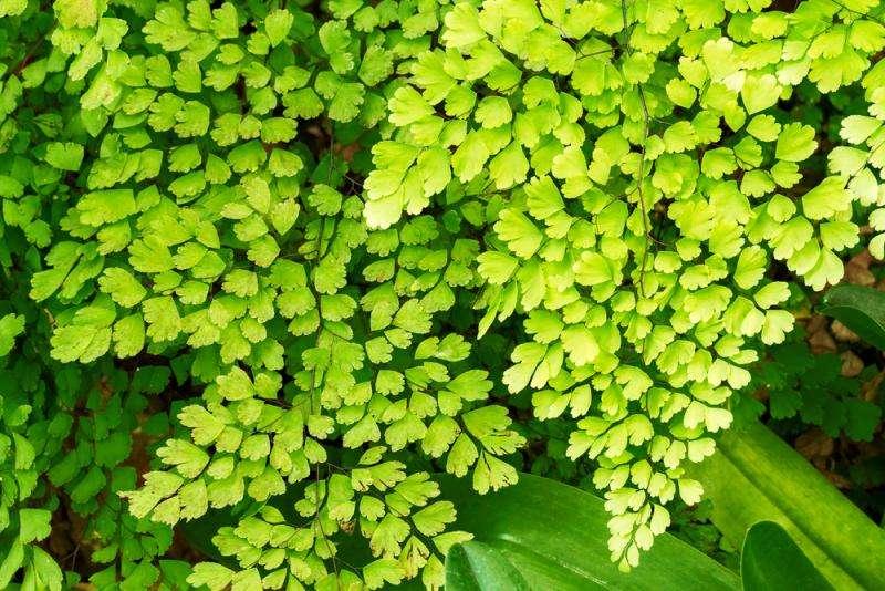 Air purification via plants and trees