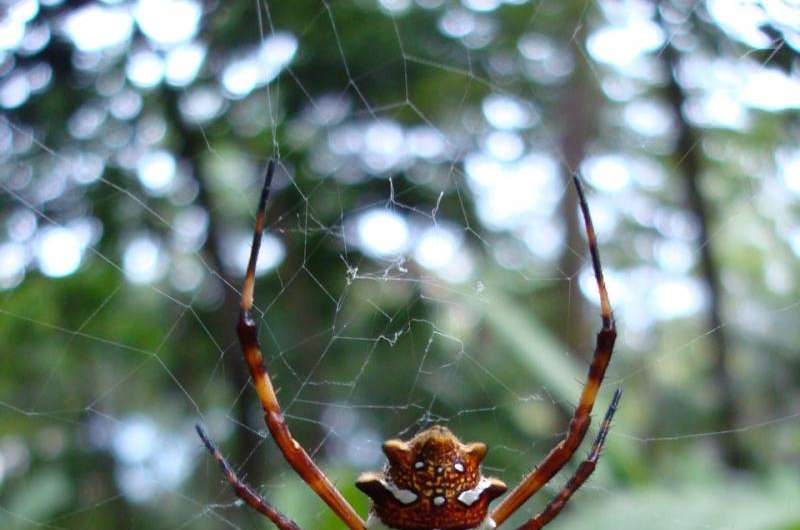 A new web of life