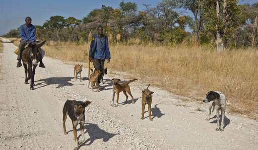 Angola slowly opens to conservationists after long civil war