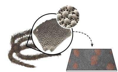 Brittle starfish shows how to make tough ceramics