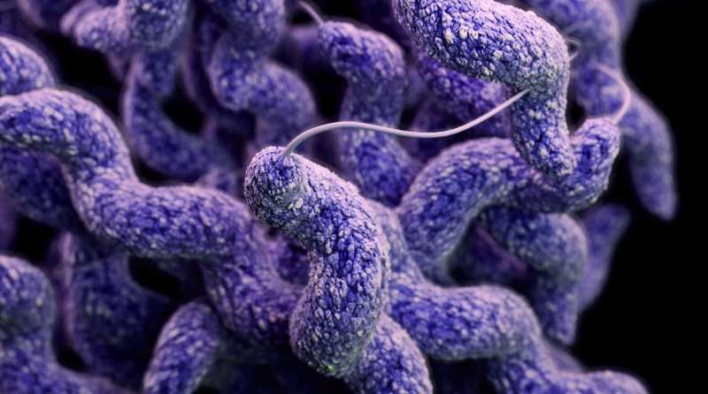 Campylobacter uses other organisms as Trojan horse to infect new hosts