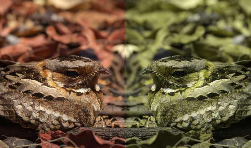 Computer game helps scientists understand animal camouflage