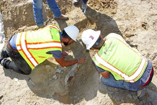 Dig that discovery! Triceratops fossil unearthed in Colorado