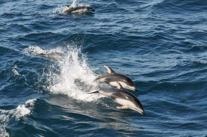 DNA left by ocean animals provides rare glimpse of marine ecosystems