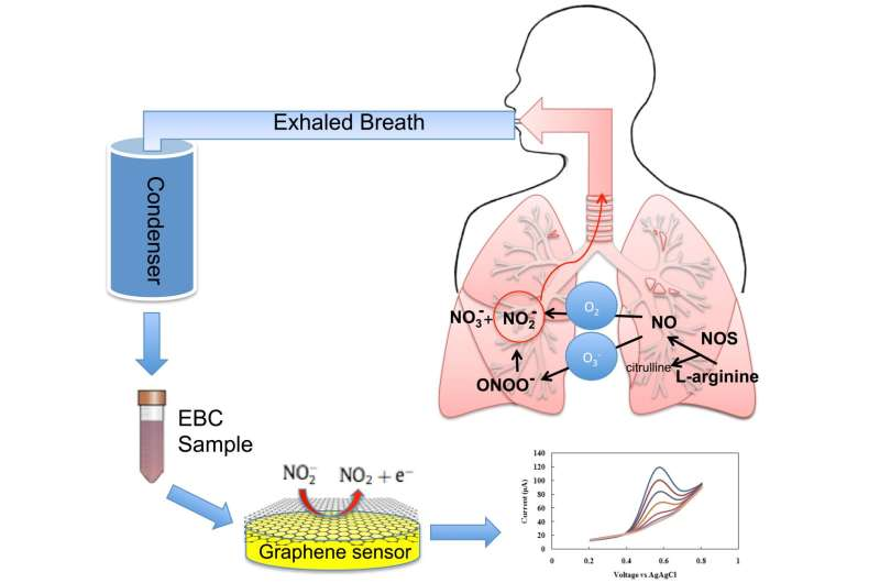 Graphene-based sensor could improve evaluation, diagnosis and treatment of asthma