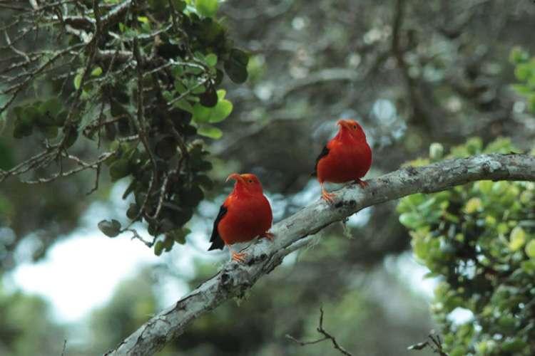 Hawaiian biodiversity has been declining for millions of years