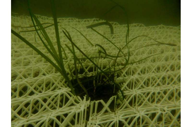 How underwater gardening can rewild the Atlantic Ocean