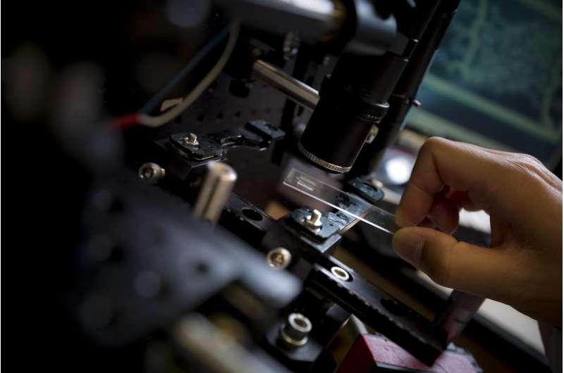 Nanoengineers 3-D print biomimetic blood vessel networks