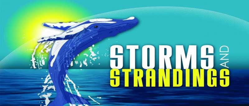 NASA scientist studies whether solar storms cause animal beachings