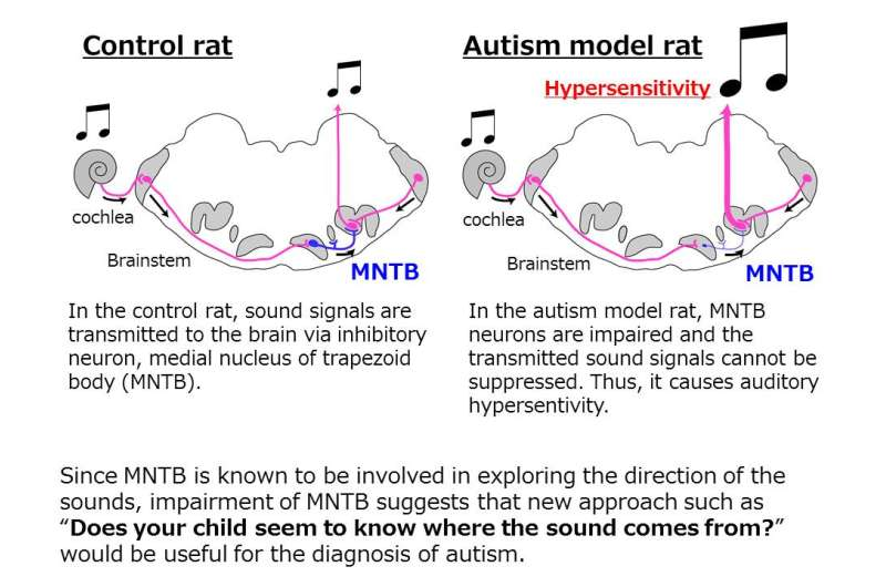 New method for the diagnosis of autism was found