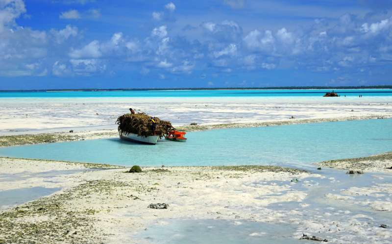 Pacific Island countries could lose 50 -- 80% of fish in local waters under climate change