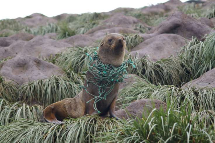 Plastic pollution in the Antarctic worse than expected