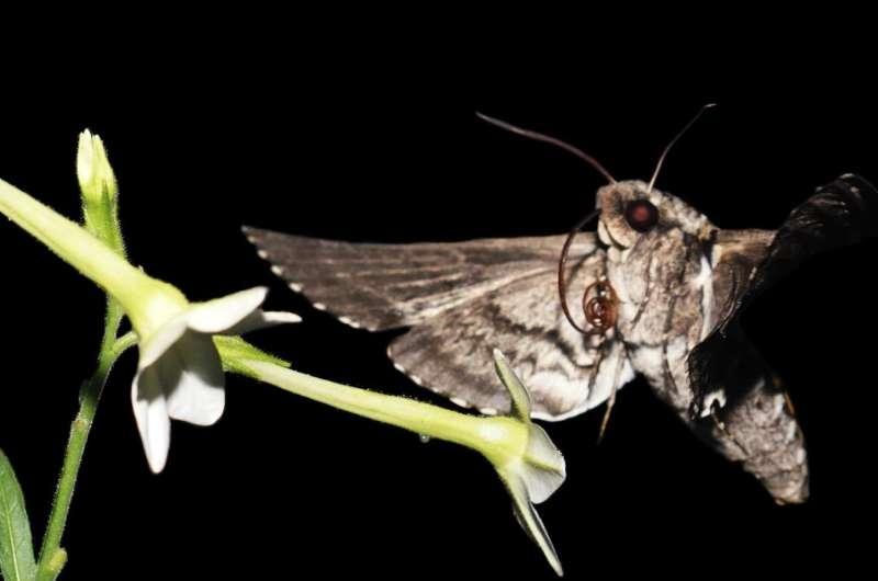 Running roaches, flapping moths create a new physics of organisms