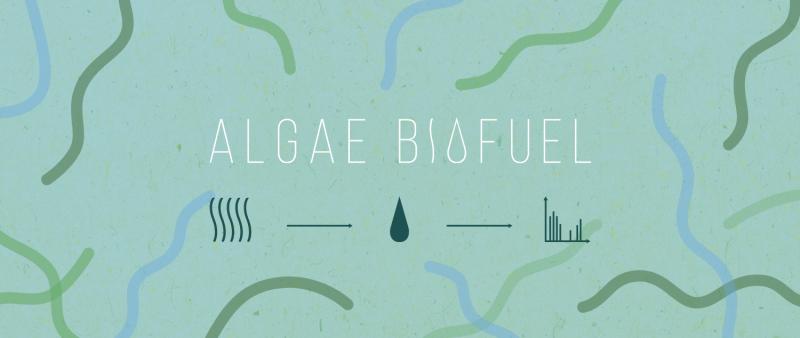 Scientists determine algae biofuel composition
