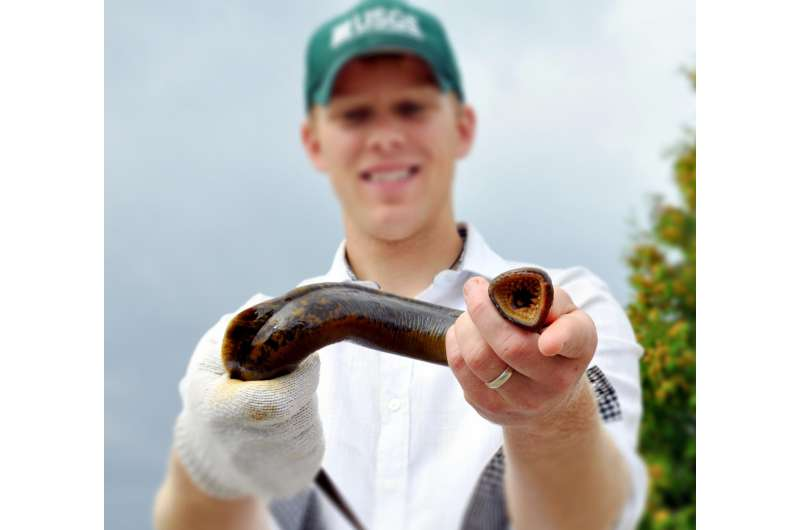 Sex-shifting fish: Growth rate could determine sea lamprey sex