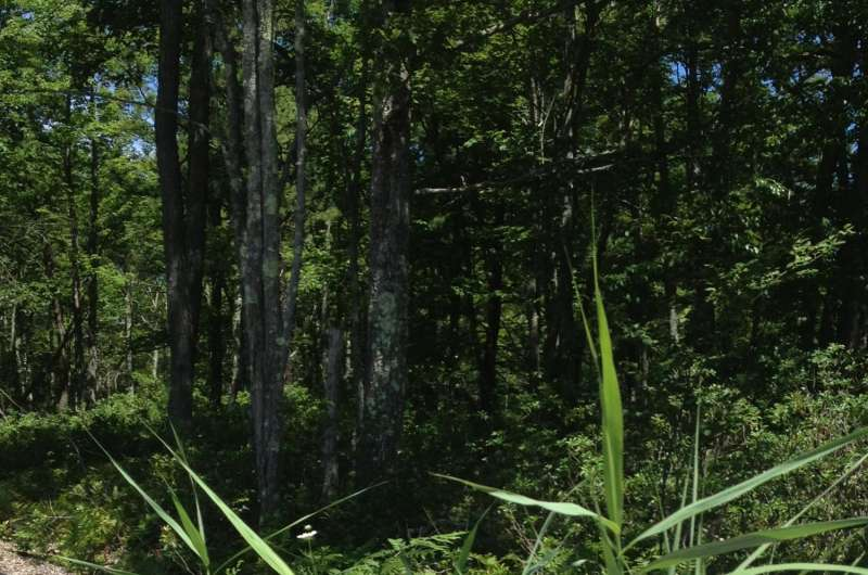 Shale gas development spurring spread of invasive plants in Pa. forests