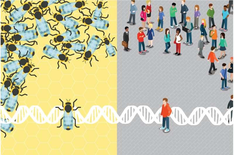 Study finds parallels between unresponsive honey bees, human autism