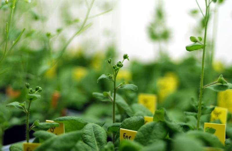 The chemical that tells plants when it's time to sleep