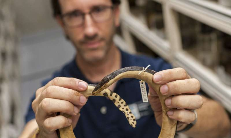 Why are there no sea snakes in the Atlantic?