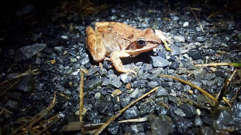 Wood frogs research clarifies risks posed to animals by warming climate
