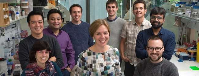 Scientists unveil structure of protein critical for gene expression