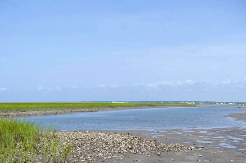 Study suggests oysters offer hot spot for reducing nutrient pollution