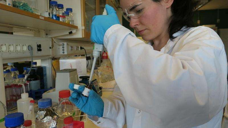 Antioxidants and plastics could be made from byproducts of wheat milling