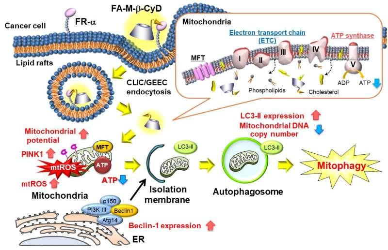 Mitochondria targeting anti-tumor compound