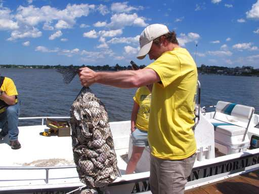 'Oyster wranglers' scout rivers for signs of shellfish life