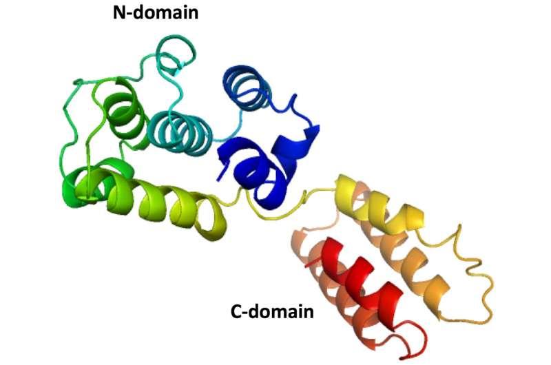 Rice U. scientists reel in structure of salmon virus