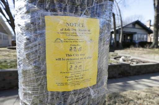 Scientists: Ash tree species pushed to brink of extinction