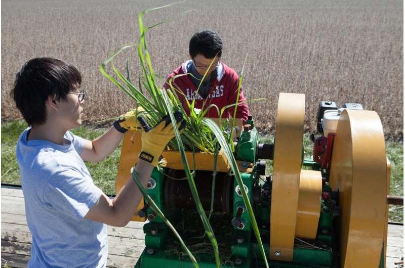 Scientists engineer sugarcane to produce biodiesel, more sugar for ethanol