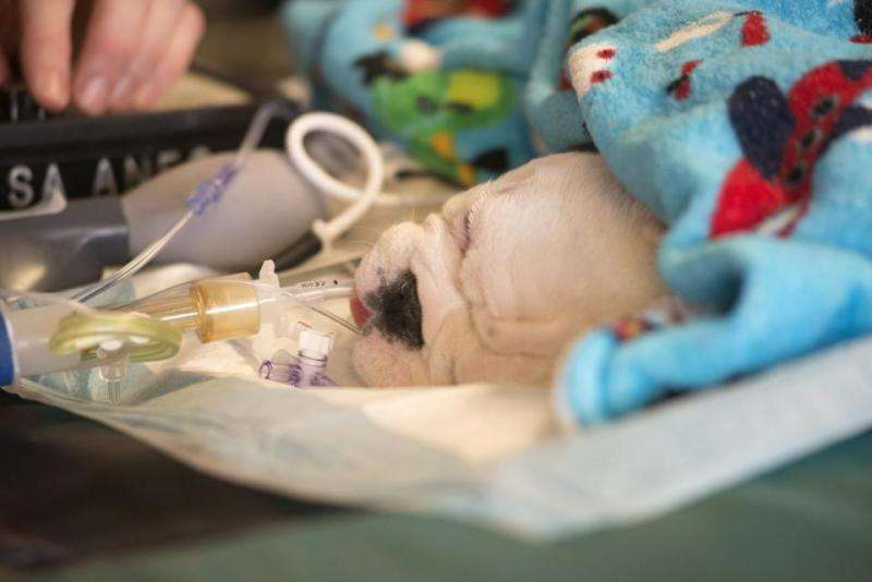 Stem cell treatment for children with spina bifida helps dogs first