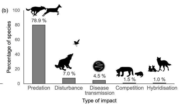 """The ecological """"pawprint"""" of domestic dogs is much greater than previously realised"""