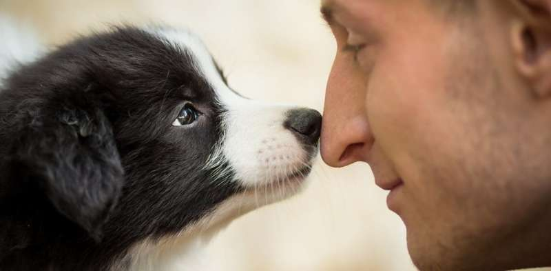 The science behind why some people love animals and others couldn't care less