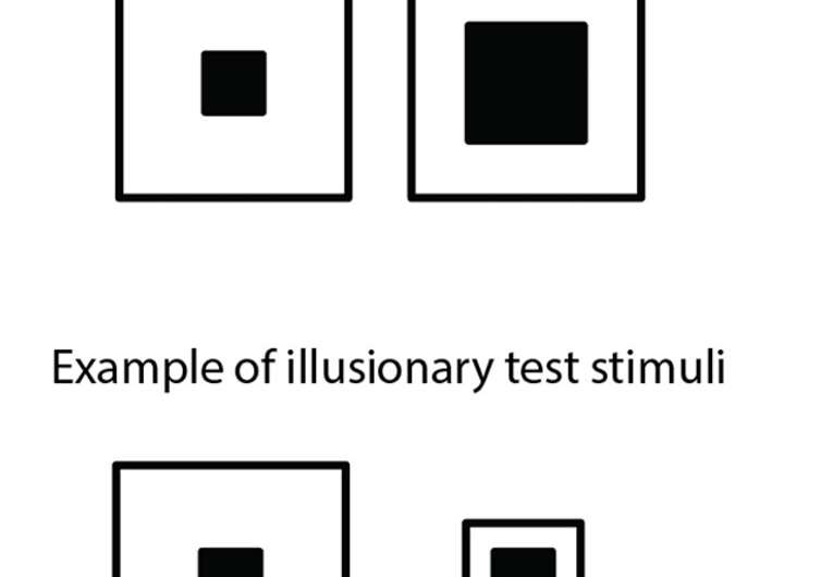 Which square is bigger? Honeybees see visual illusions like humans do