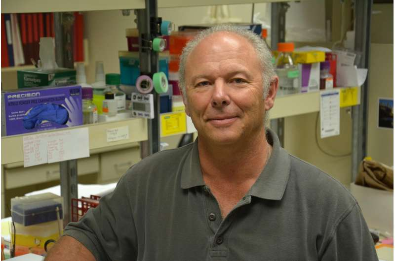 WSU researchers see popular herbicide affecting health across generations