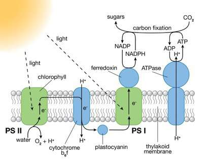 Scientists design molecular system for artificial photosynthesis