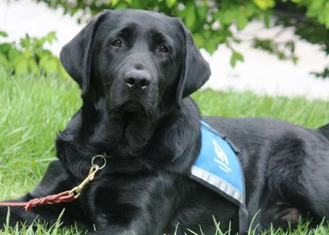 Study reveals recommendations for certifying emotional support animals