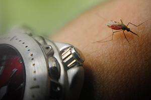 Researchers use light to manipulate mosquitoes