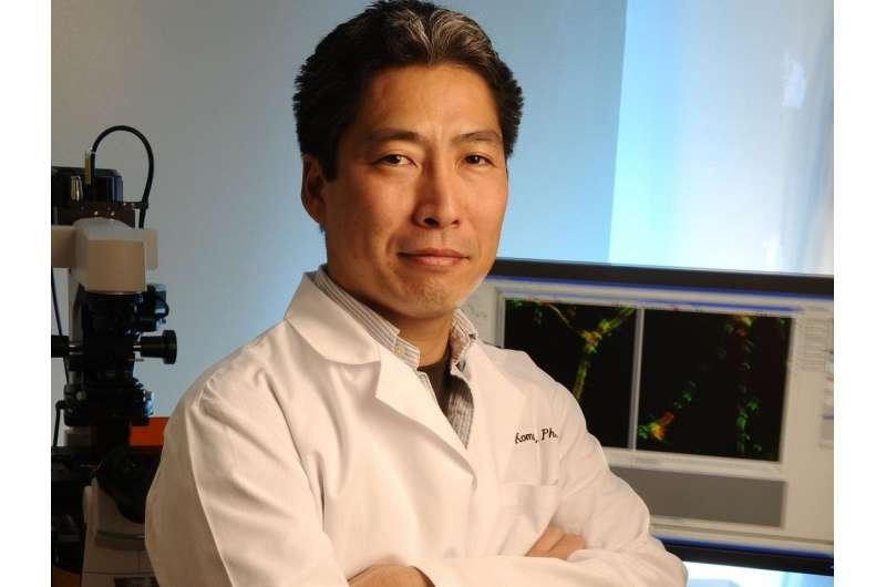 Scientists find key to regenerating blood vessels