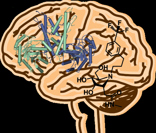 3D structure of enzyme opens path to new drug design in brain disease
