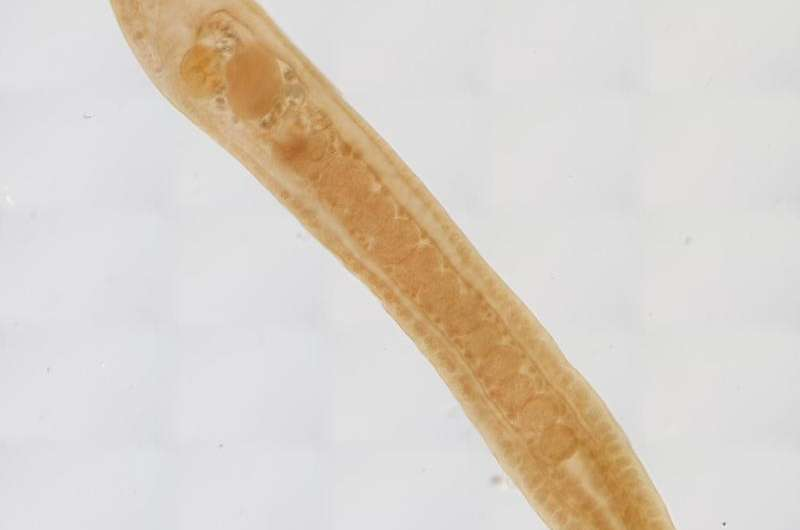 Climate change could kill off parasites, destabilizing ecosystems